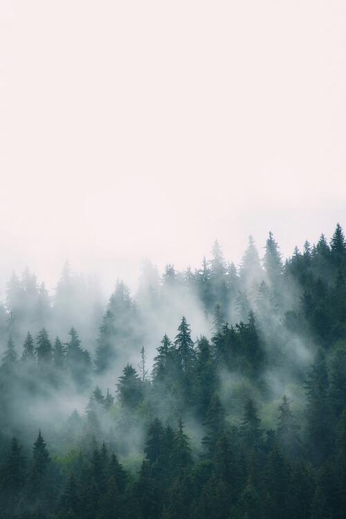 Murais de parede Fog and forest