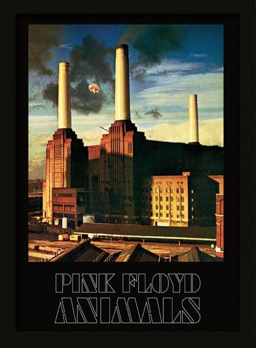 Framed poster Pink Floyd - Animals