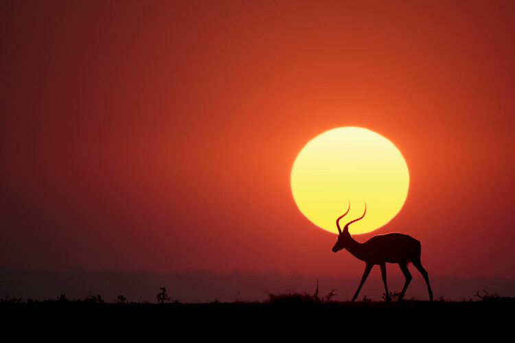 Art Print on Demand An African Sunset