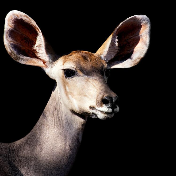 Art Print on Demand Antelope Impala Portrait Black Edition