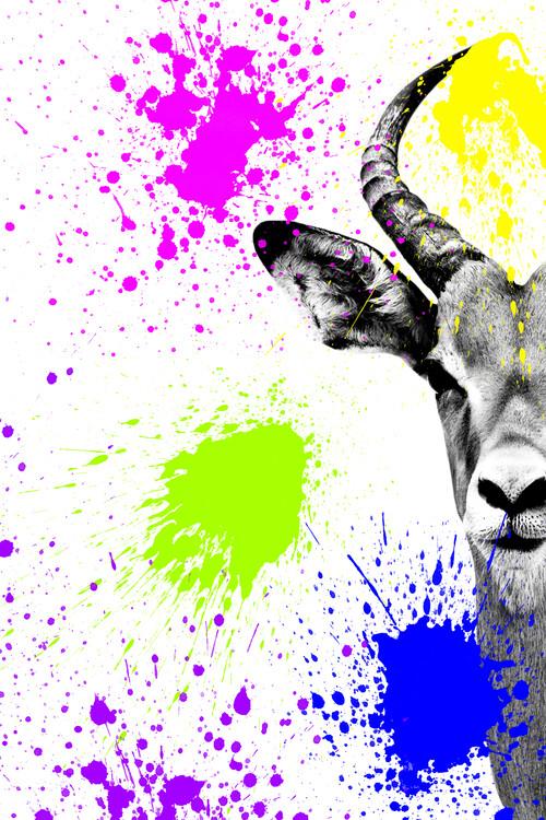 Art Print on Demand Antelope Impala Portrait
