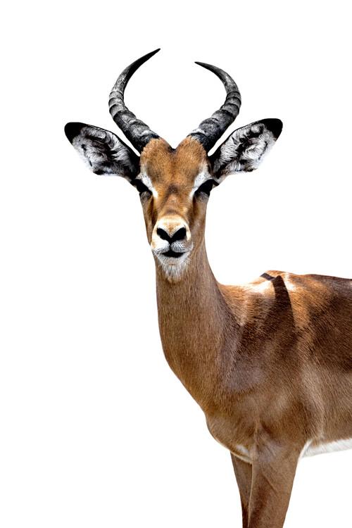 Art Print on Demand Antelope White Edition