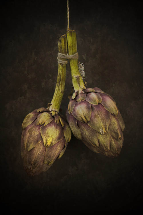 Art Print on Demand Artichoke