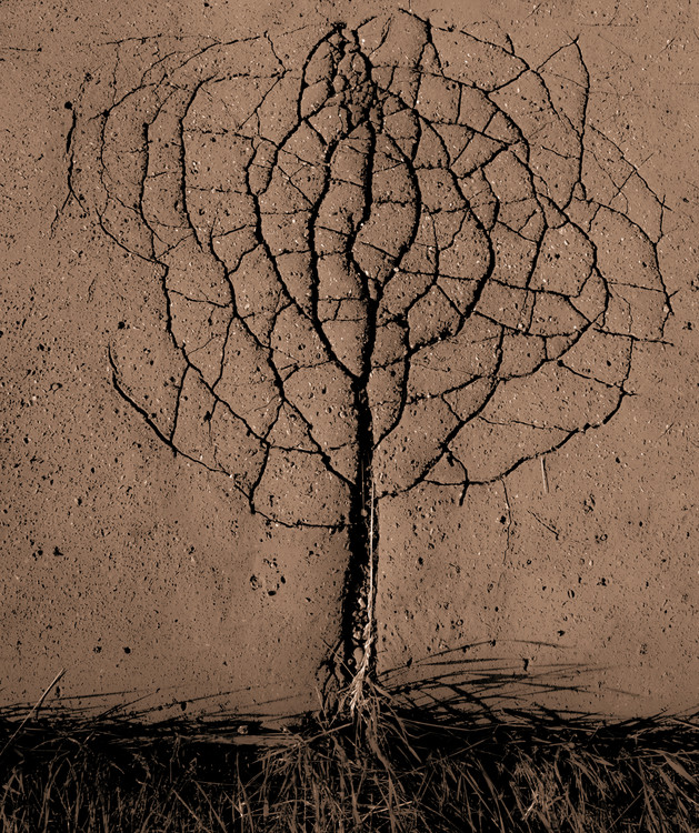 Art Print on Demand Asphalt Tree