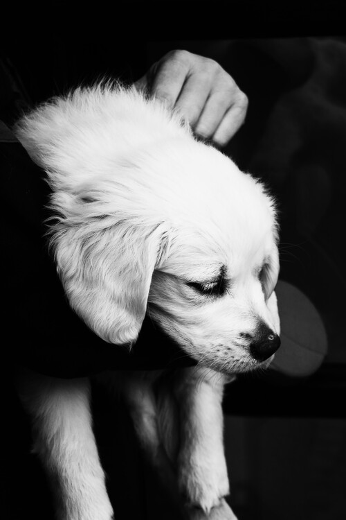 Art Print on Demand Black and White Puppy