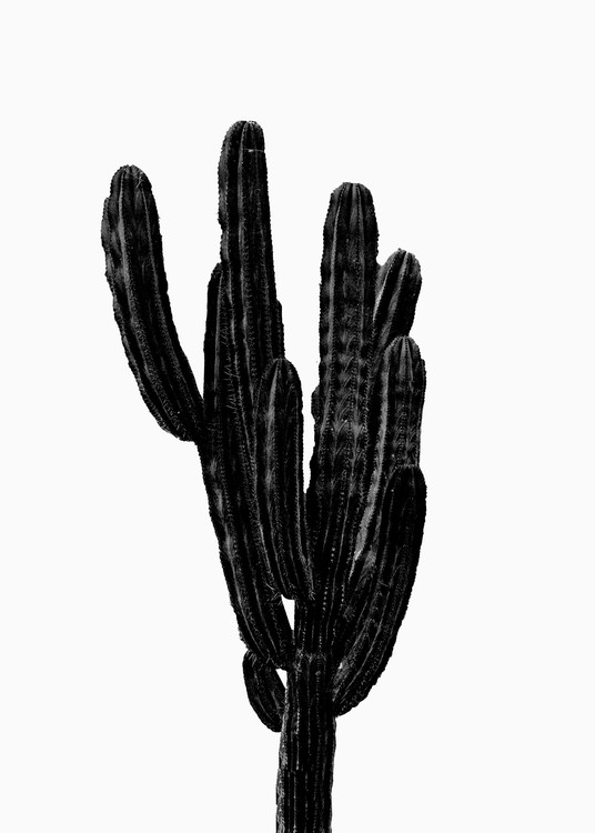 Art Print on Demand BLACK CACTUS