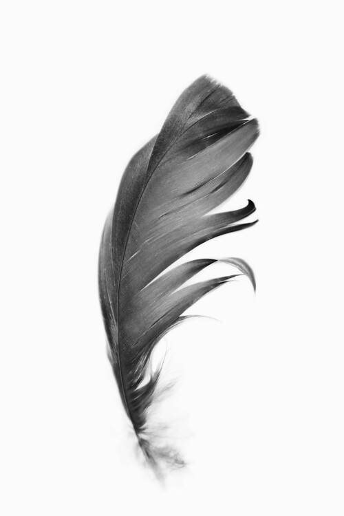 Art Print on Demand Black feather