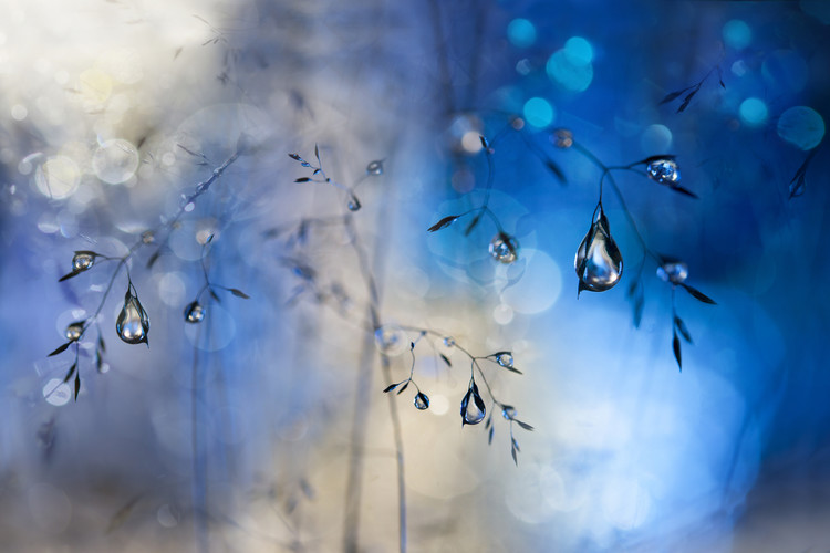 Art Print on Demand Blue rain