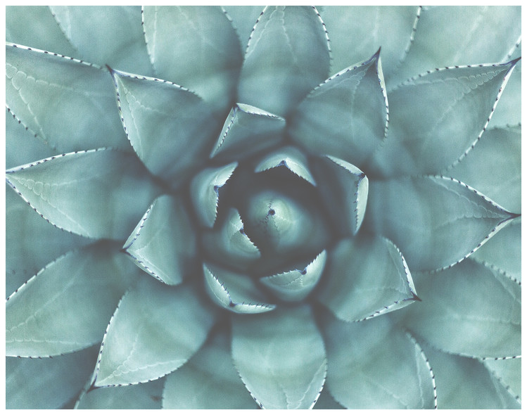 Art Print on Demand Border succulent green