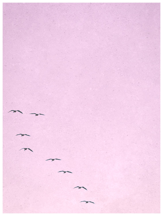 Art Print on Demand borderpinkbirds