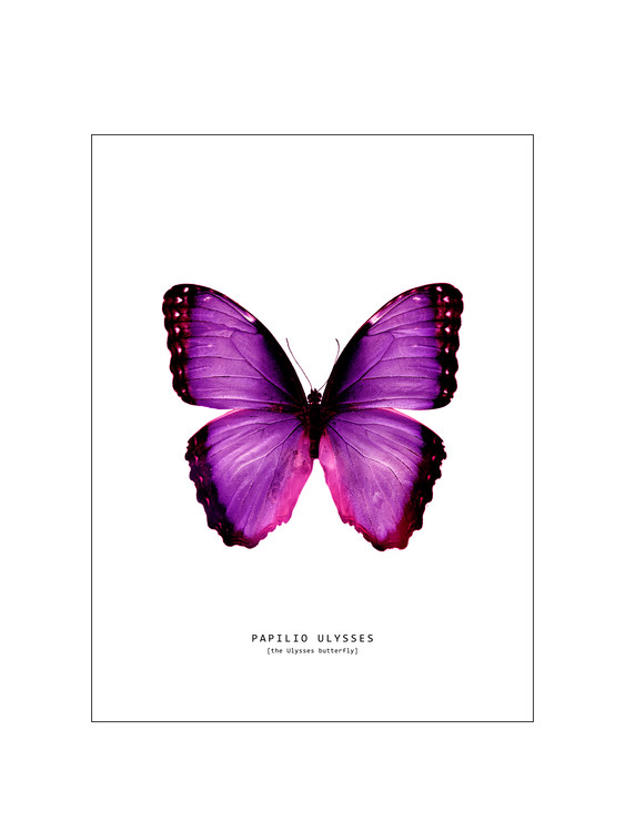 Art Print on Demand butterfly 2