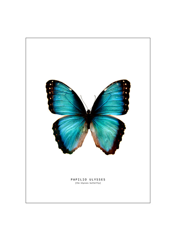 Art Print on Demand butterfly