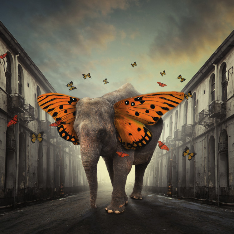 Art Print on Demand Butterphant
