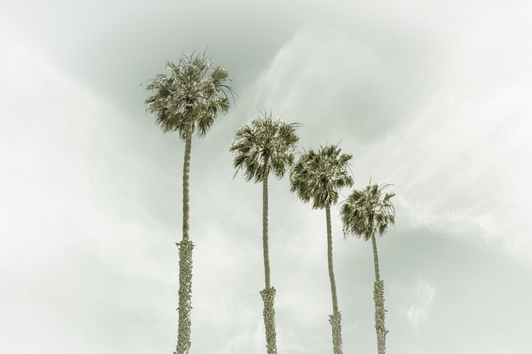 Art Print on Demand California Vintage Palm Trees