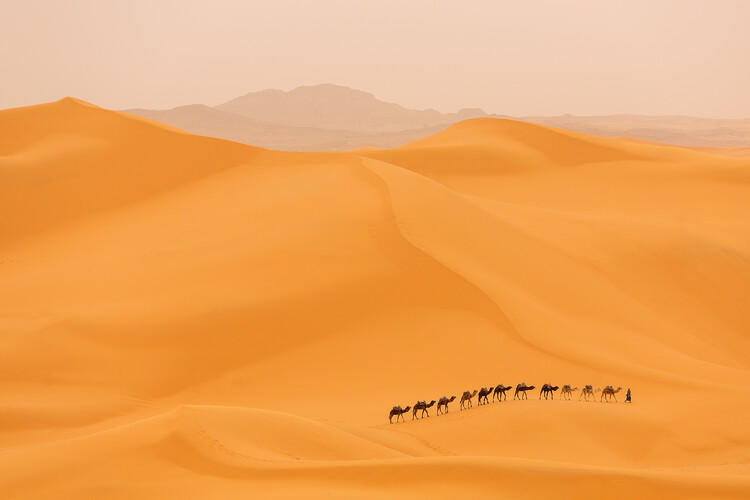 Art Print on Demand Camels caravan in Sahara