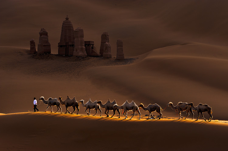Art Print on Demand Castle and Camels