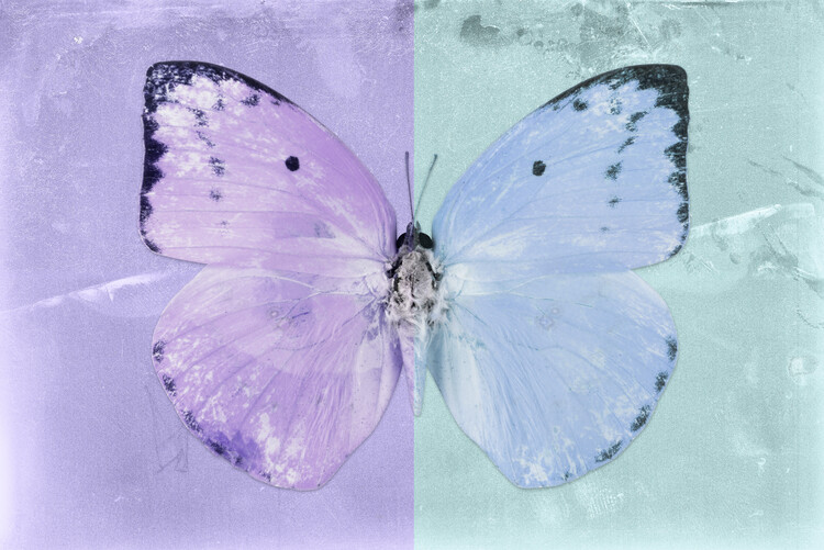 Art Print on Demand CATOPSILIA - MAUVE & TURQUOISE