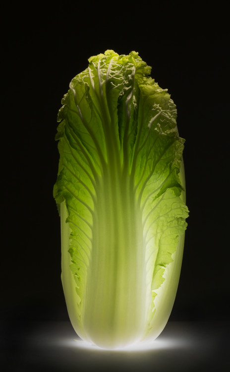 Art Print on Demand Chinese cabbage
