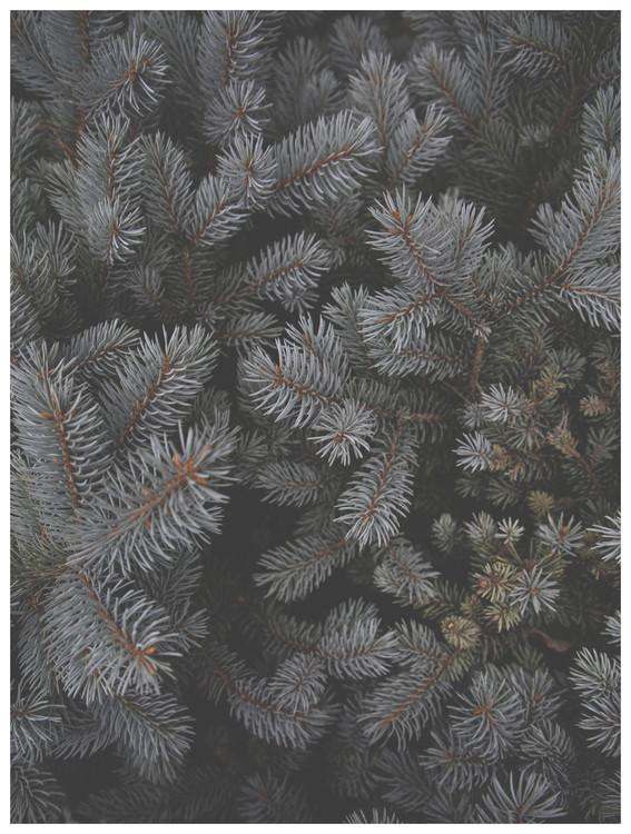 Art Print on Demand christmas tree foilage