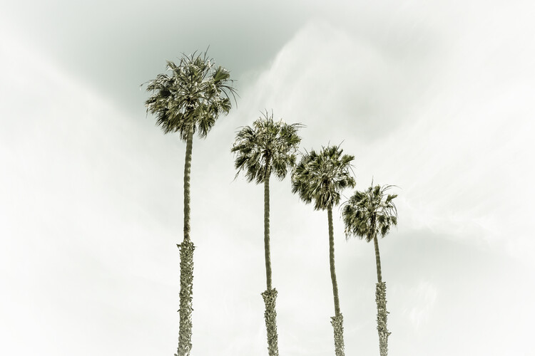 Art Print on Demand Coastal Palm Trees | Vintage