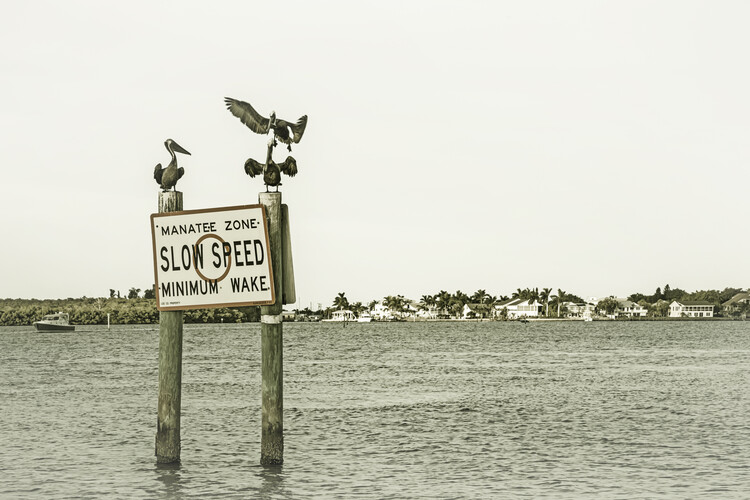 Art Print on Demand Coastal View from Fort Myers Beach   Vintage