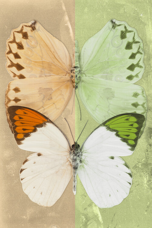 Art Print on Demand DUO FORMOIA - DARK YELLOW & LIME GREEN