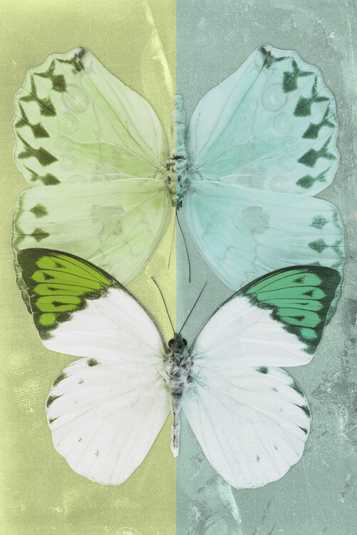 Art Print on Demand DUO FORMOIA - LIME GREEN & CORAL GREEN