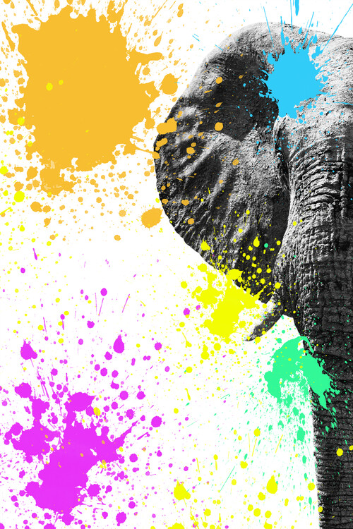 Art Print on Demand Elephant Portrait II