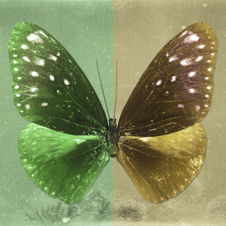 Art Print on Demand EUPLOEA SQ - GREEN & GOLD