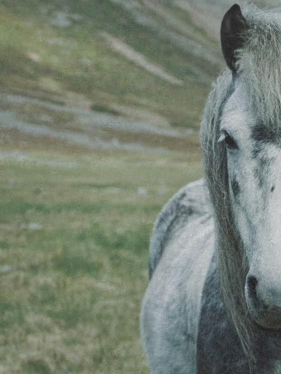 Art Print on Demand faded horse