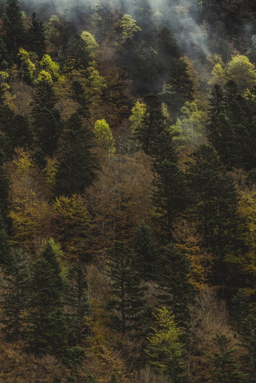 Art Print on Demand Fall trees and fog