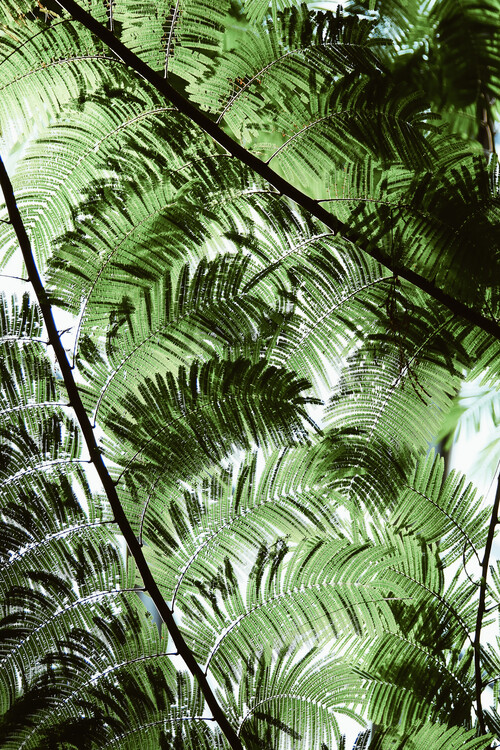 Art Print on Demand Fern heaven