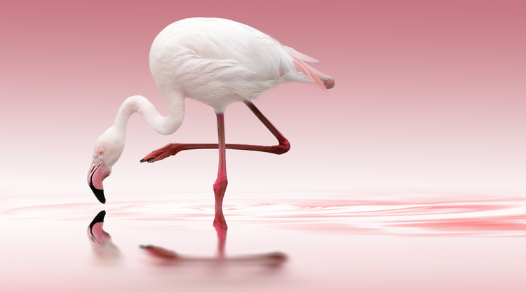Art Print on Demand Flamingo