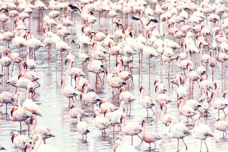 Art Print on Demand Flock of flamingos