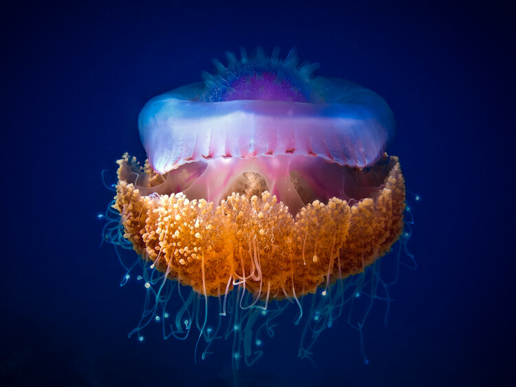 Art Print on Demand Fried Egg Jellyfish