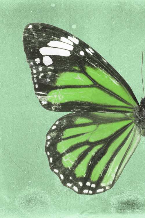 Art Print on Demand GENUTIA PROFIL - GREEN