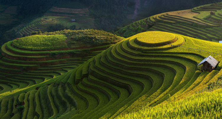 Art Print on Demand Gold Rice Terrace In Mu Cang Chai,Vietnam