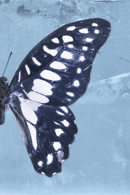 Art Print on Demand GRAPHIUM PROFIL - BLUE