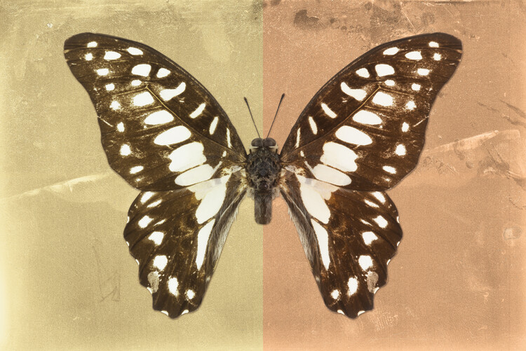 Art Print on Demand GRAPHIUM PROFIL - HONEY & ORANGE