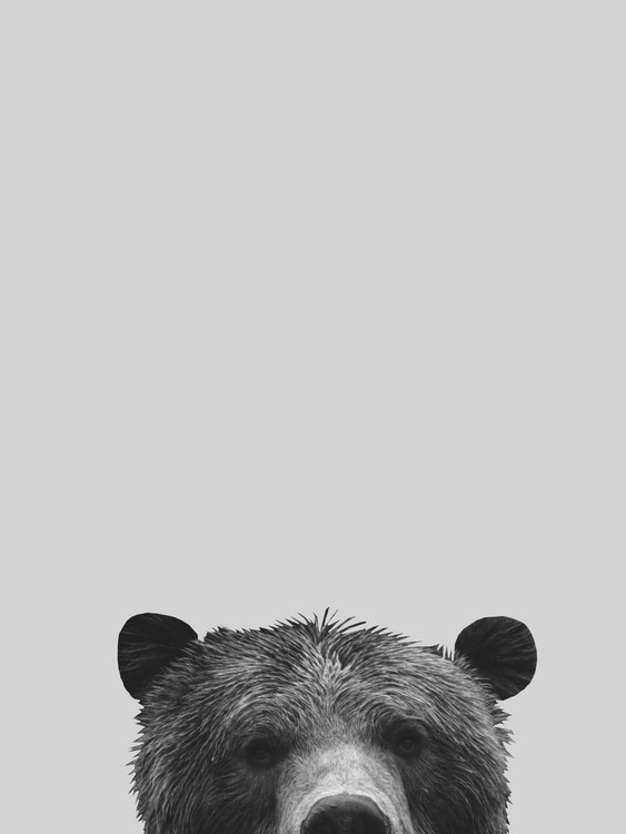 Art Print on Demand Grey bear