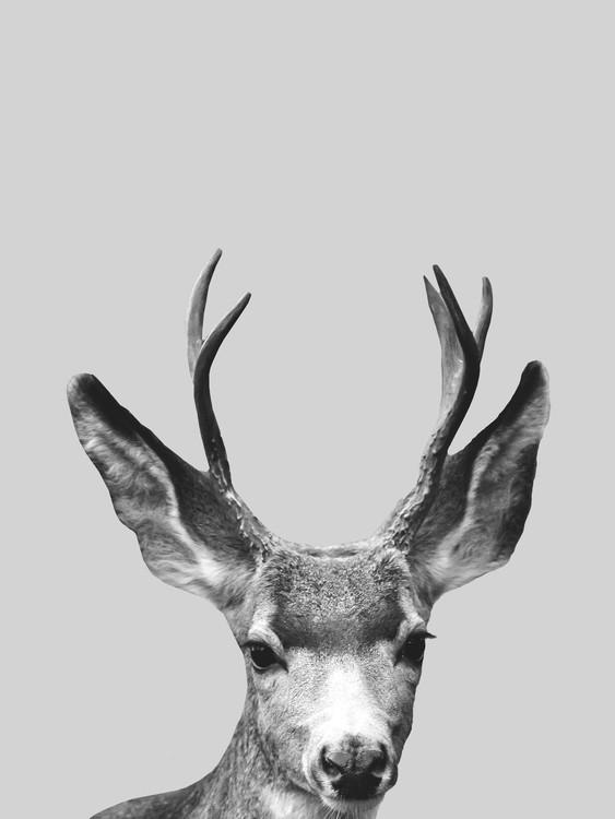 Art Print on Demand Grey deer