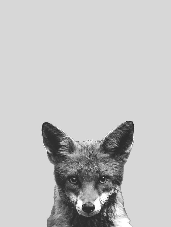 Art Print on Demand Grey fox