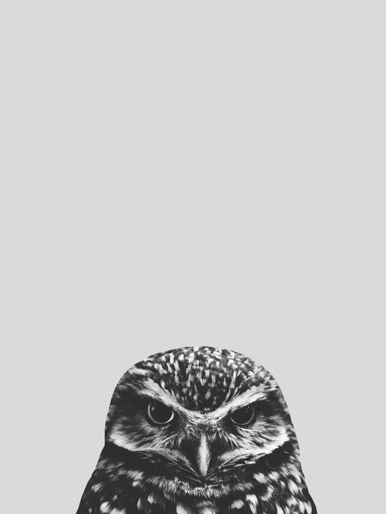Art Print on Demand Grey owl