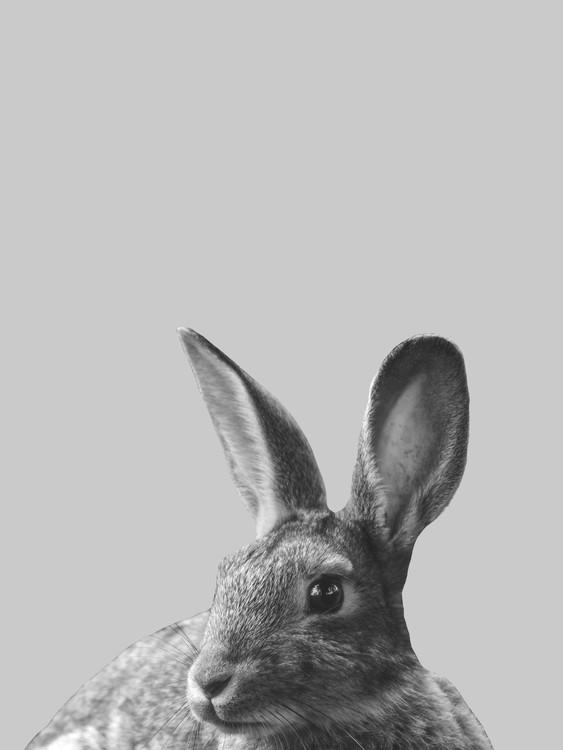 Art Print on Demand Grey rabbit