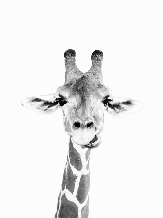 Art Print on Demand Happy giraffe