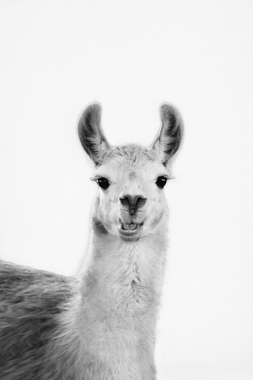 Art Print on Demand Happy llama
