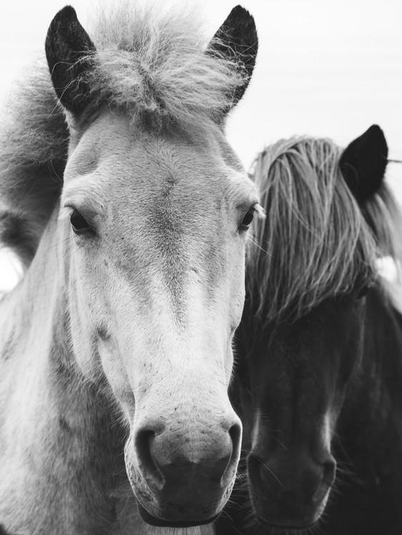Art Print on Demand horses