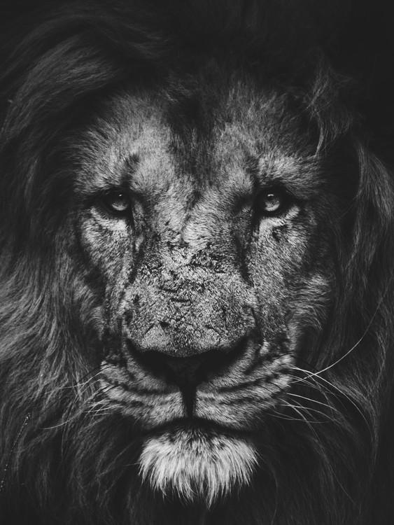 Art Print on Demand lion2