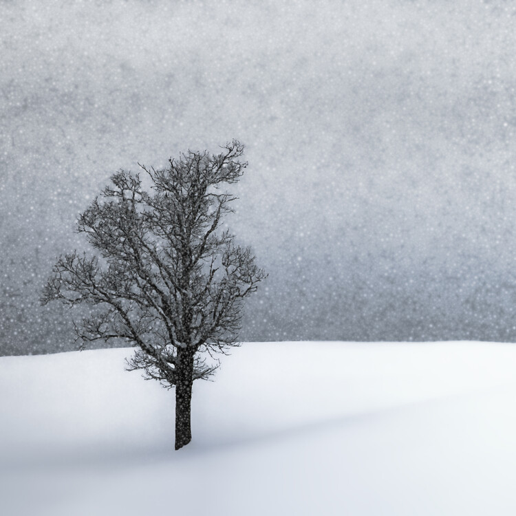 Art Print on Demand LONELY TREE Idyllic Winterlandscape