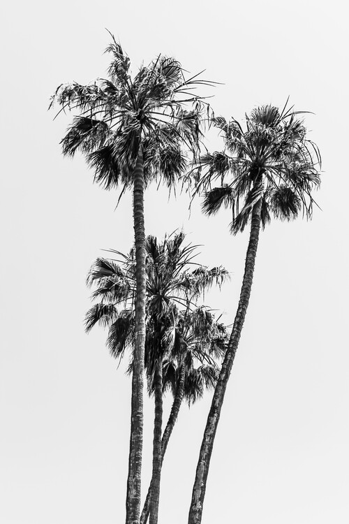 Art Print on Demand Lovely Palm Trees | monochrome